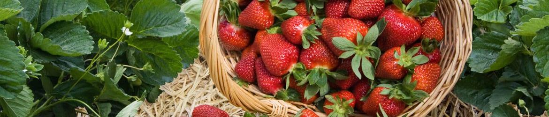jordbærmark